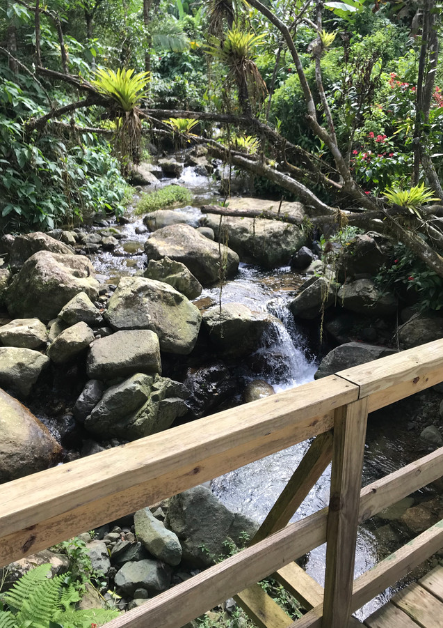 Puente Bosque Escuela.JPG