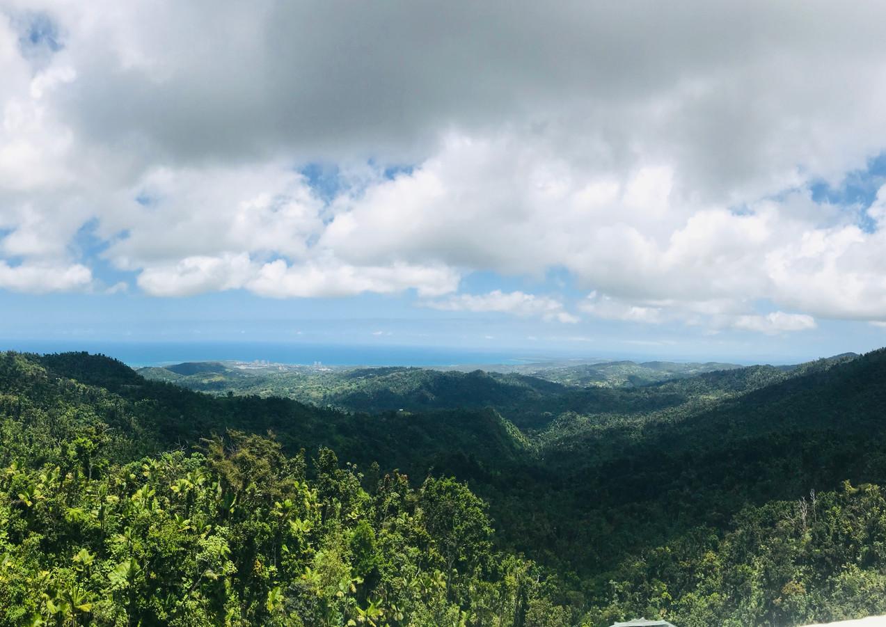 Bosque El Yunque.jpg