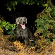 Nando guckt aus dem Wald