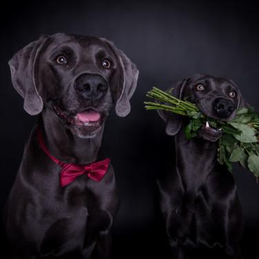 Hochzeit  :-)