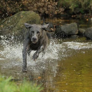 Nando rennt durch den Rotbach