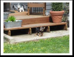 puppy on patio
