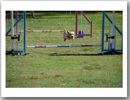 agility (1)