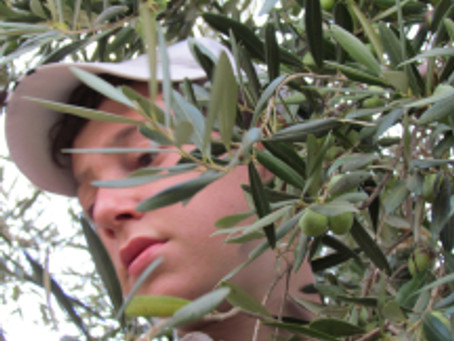 Tu' B'Shvat, Festival of the Trees