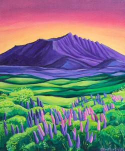 Lupin Sunset