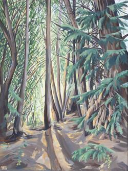 Queenstown Hill forest