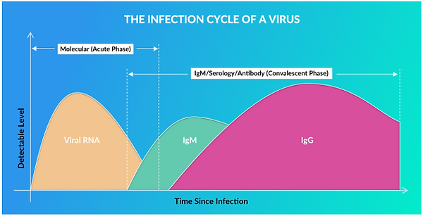 Covid Infection Cycle.PNG