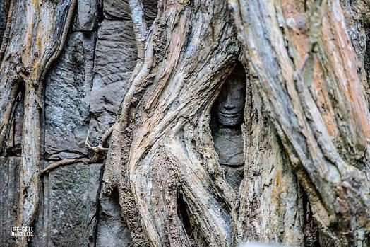"""Tiny Dancer"" Angkor Wat, Cambodia (2018)"