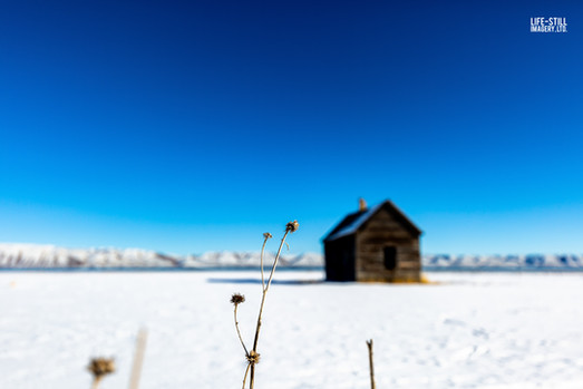 """Snow on the Homestead"" St. Charles, Idaho (2018)"