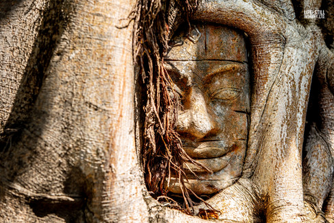 """""""The Old Man in the Tree"""" Siem Reap, Cambodia (2018)"""