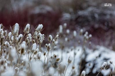 """Thistles on a Snowy Day"" Blacksmith Fork Canyon, Utah (2018)"