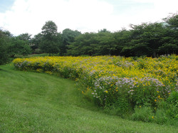 GFGC Meadow