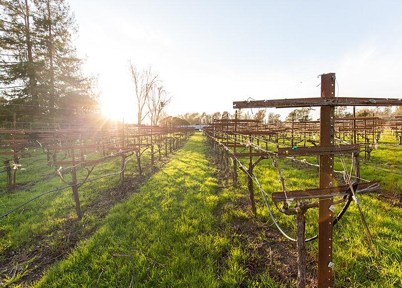 Seppa Vineyard Sonoma Coast Pinot Noir