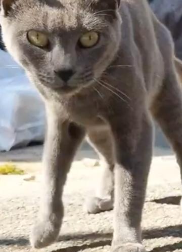 Meet Mika