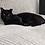 Thumbnail: Meet Salem **ADOPTED**