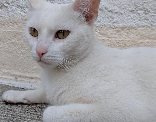 Meet Hector