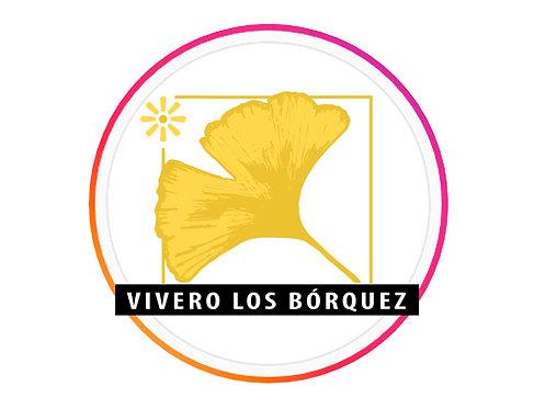 Vivero Los Bórquez