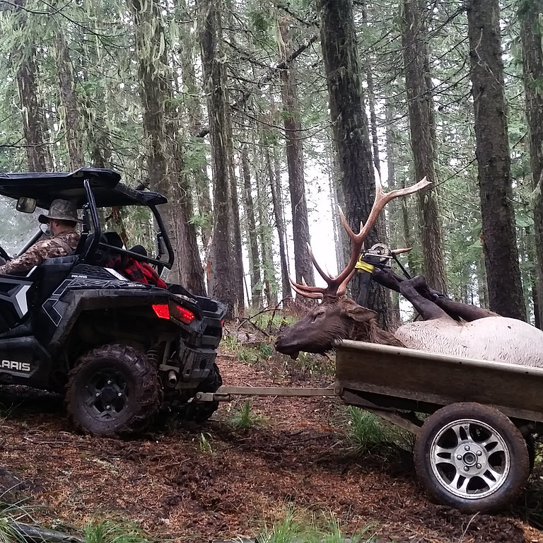 AOT Elk Camp