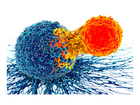 Cancer de la unión gastroesofágica con o sin quimioterapia +/- quimioterapia