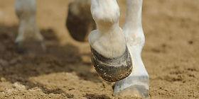 horse-hoof-close-up-1280x640.jpg
