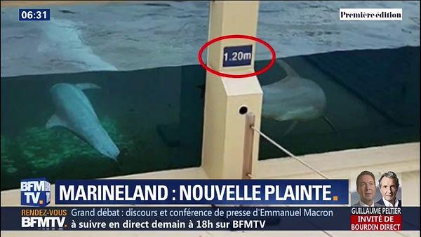 Marineland-repond-aux-accusations-de-mal