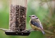 Oiseaux 4.jpg