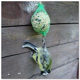 Oiseaux 5.jpg