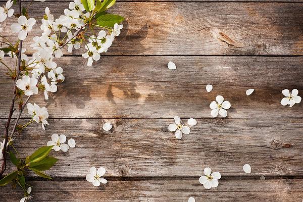 flowers on wooden background.jpg