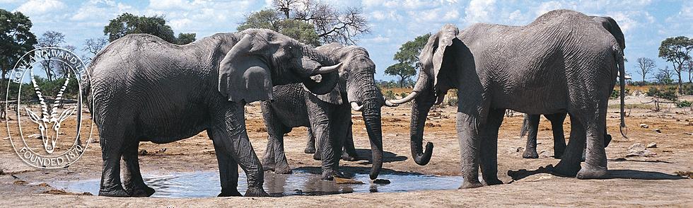stock-elephants copy copy.png