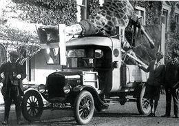 giraffe on car.jpg
