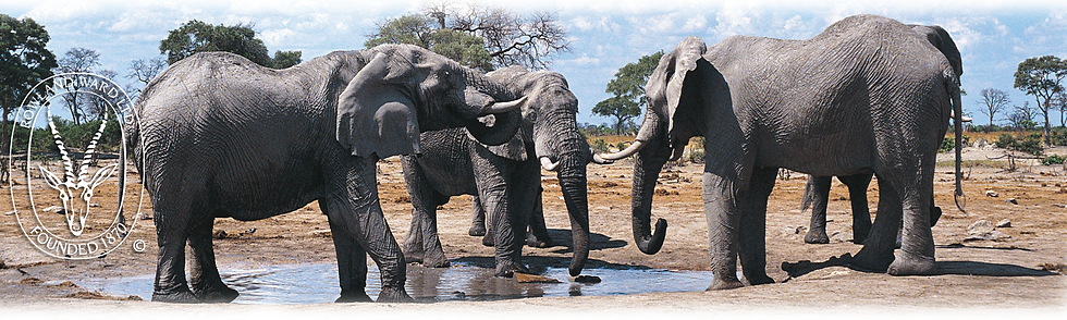 stock-elephants copy.png