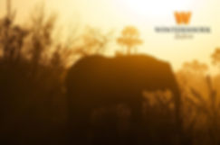 elephant-at-sunset-logo-top.jpg