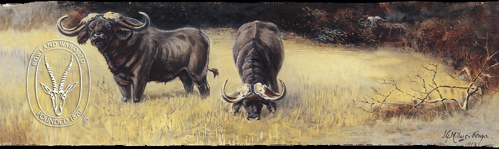 Millais buffalo.png