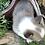 Thumbnail: Baker ~ Sable Bluie ~