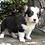 Thumbnail: Brewster ~ Tri ~
