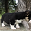 Thumbnail: Shorty ~ Tri Fluffy Carrier ~
