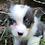 Thumbnail: Bam ~ Tri Bluie ~ 2 Blue Eyes