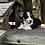 Thumbnail: Sage ~ Tri ~ Fluffy Carrier