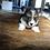 Thumbnail: Erwin ~ Rare Tri Fluffy ~ Less Shedding