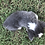 Thumbnail: Banning ~ Tri Bluie ~