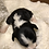 Thumbnail: Stryker ~ Fluffy Tri w/Brindle Points