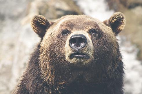 Grizzly Bear_edited.jpg
