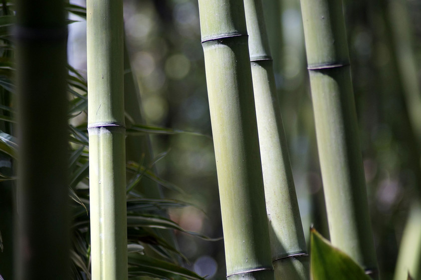 General Uses for Bamboo