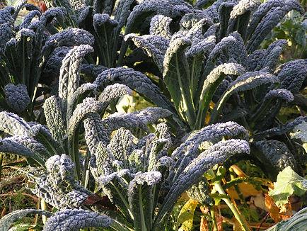 peaceful plants glasgow