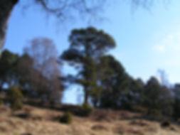 mindfulness glasgow tree