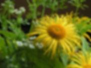 mindfulness glasgow flower