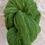 Thumbnail: Green Brushed Mohair 12 ply—Mollydale Yarns