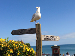 The South West Coast Path passes our front door