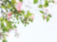 tomoko-uji-627708-unsplash.jpg