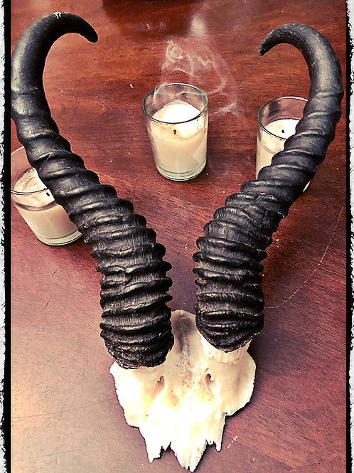 Springbok Skull Plate with Horns